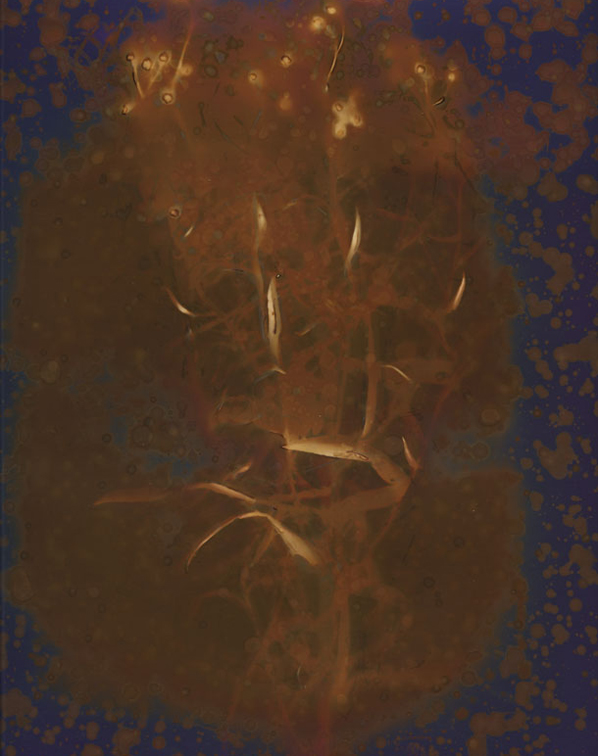 Lumen14.jpg