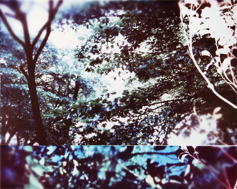 Tree_Panel_5.jpg