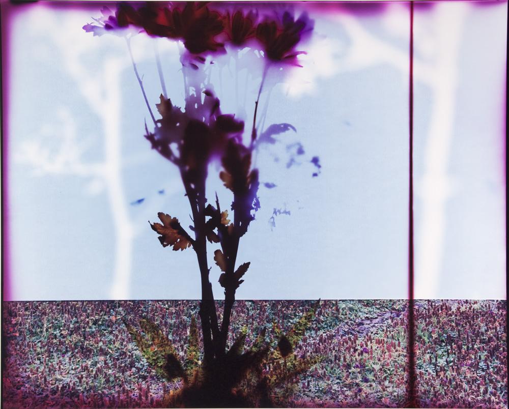 Tree_Panel_9.jpg