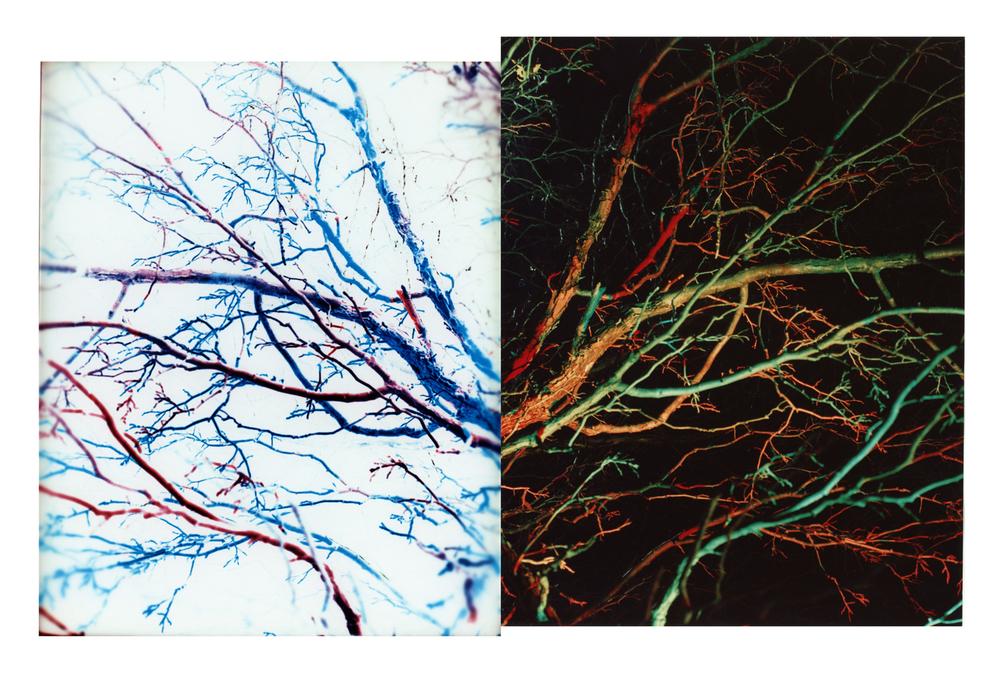Positive_Negative_Trees.jpg