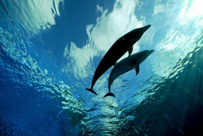 http://beyondpesticides.org/dailynewsblog/2016/10/former-inert-ingredient-pesticide-products-found-fish-birds-dolphins/