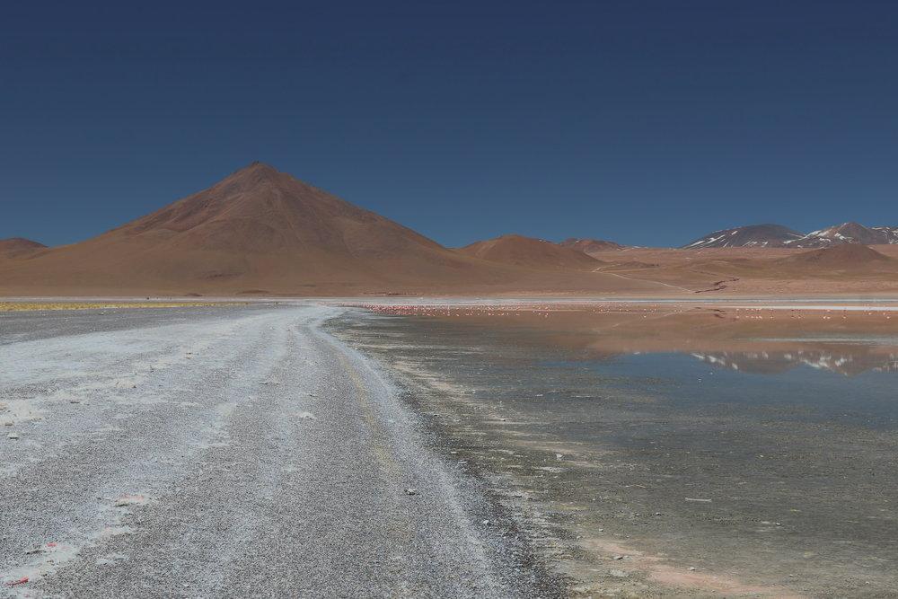 """""""ShyFlamingos of the Solar""""Solar de Uyuni, Bolivia"""