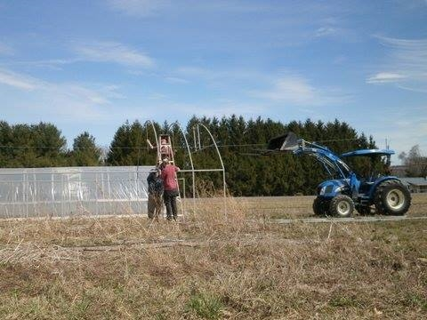 putting up hoop house.jpg