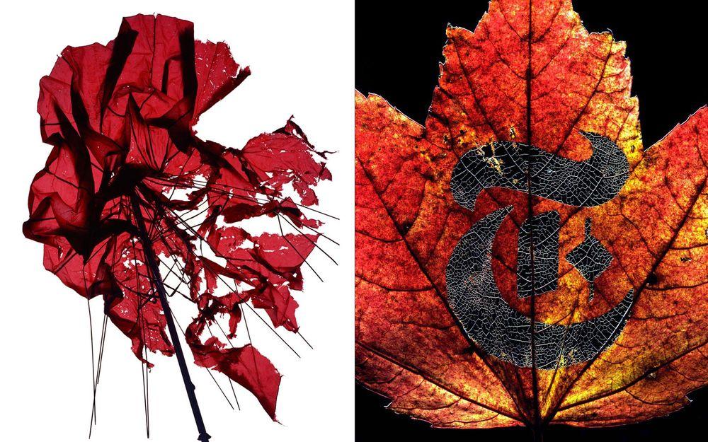 PR_umbrella-leaf_sq.jpg
