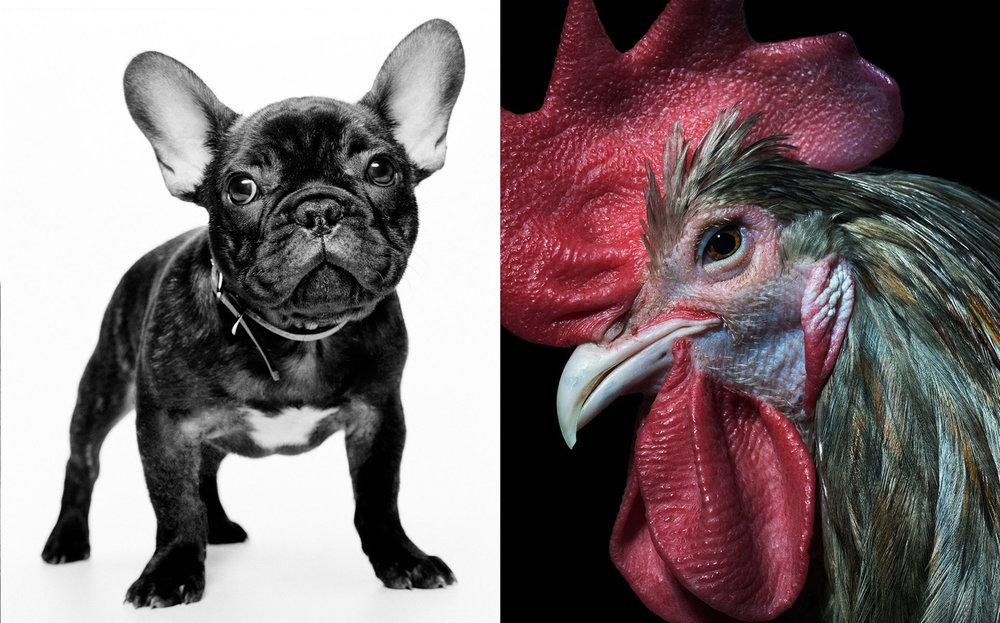 PR_tonka_chicken_sq.jpg