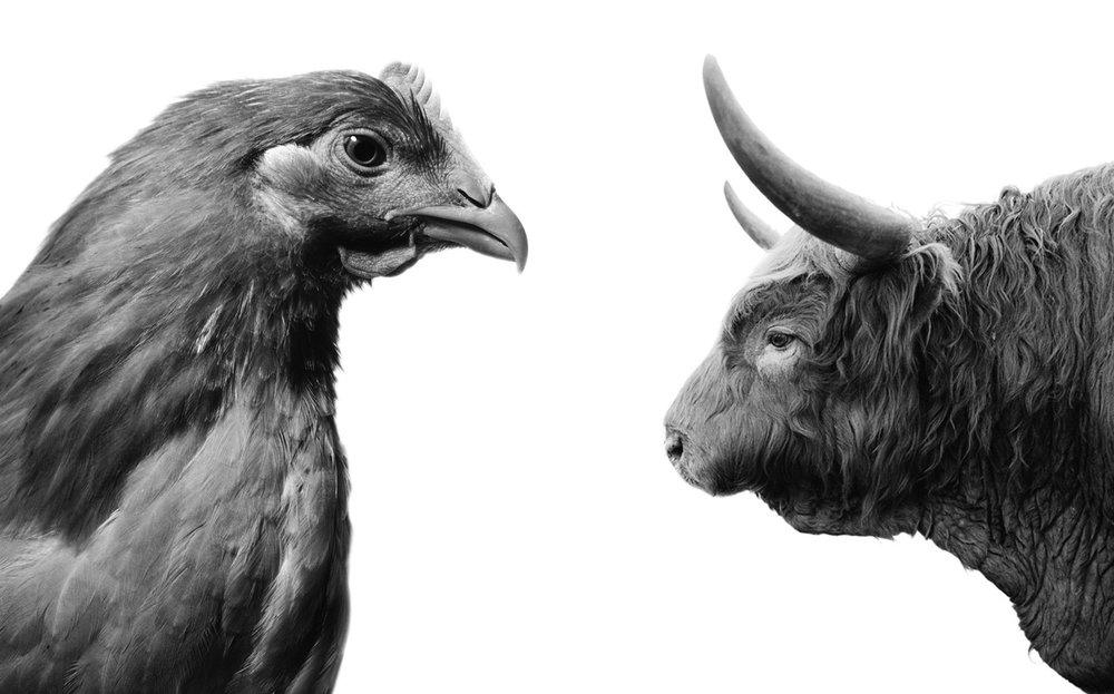 PR_chick-bull_sq.jpg