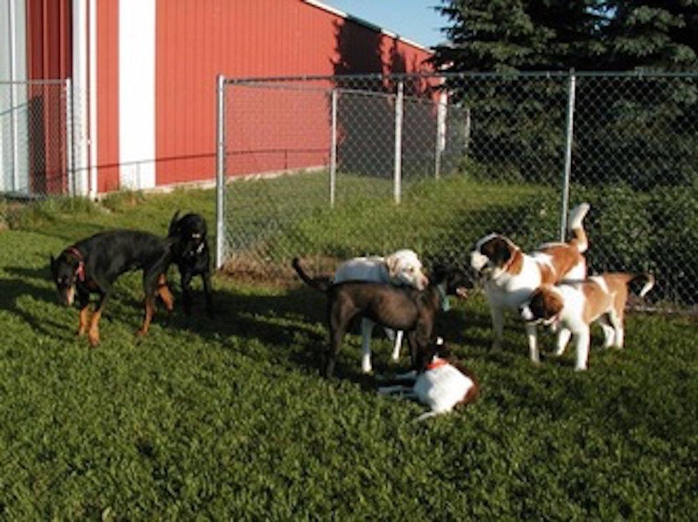 cozy-dogs.jpg