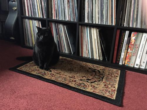 Sebastian protects the music.