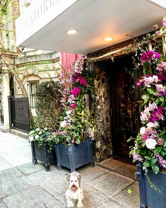 Check out this pair of trees in front of Marjorelle ( one of my favorite restaurants). Flanking the doors to the restaurant, these ivy cone towers are full of cut orchids, peonies, cherry blossoms, and an array of other beautiful specimens. It would be difficult enough to keep them fresh inside beyond a day or two. These have been outside now for a couple of weeks surviving the heat and elements. The restaurant is apart of The Lowell Hotel and is as delicious as it is beautiful. My favorite place is the lounge tucked in the back which looks like a gorgeous New York living room. Best place on the Upper Eastside to meet for a drink or coffee. Enjoy!