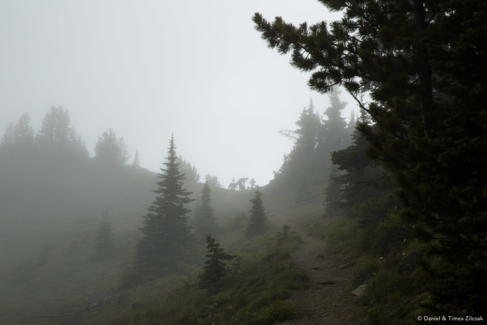 Hikers and their best friend at Marmot Pass enveloped in a dense fog