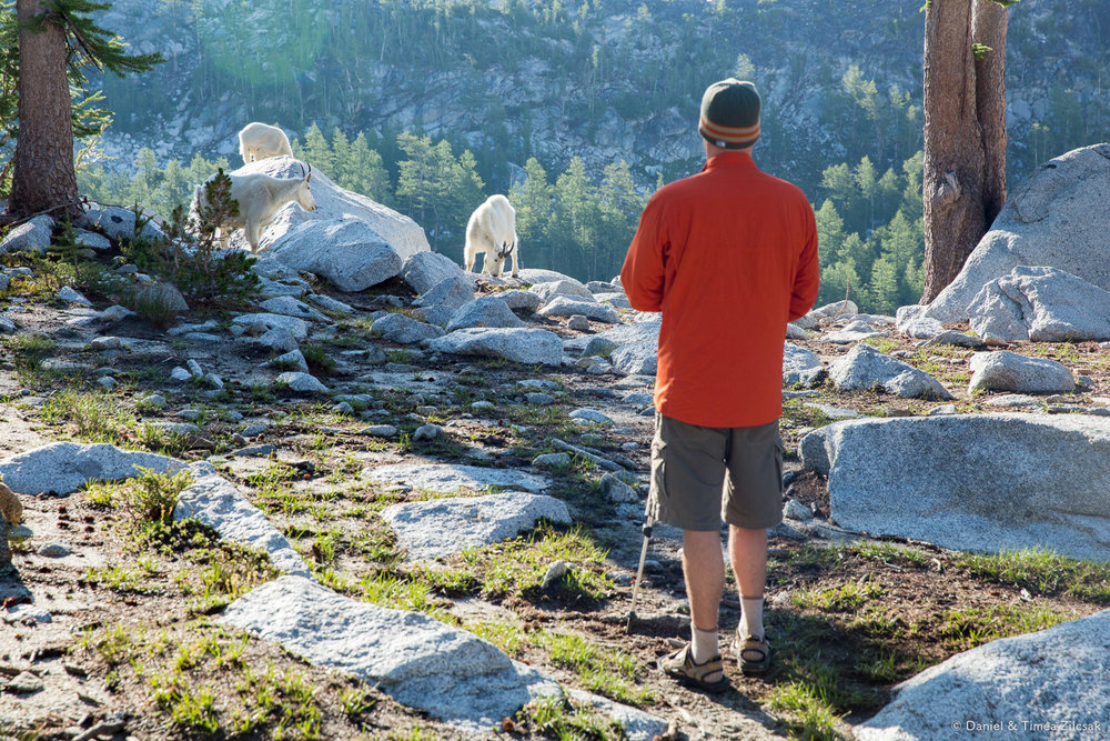 Sharing camp with the famous goats of The Enchantments