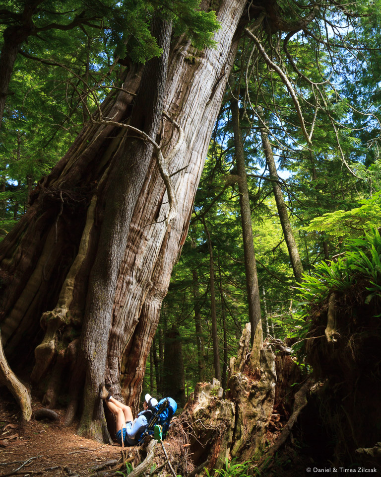 South Coast Wilderness Trail south of Toleak Point, Olympic National Park