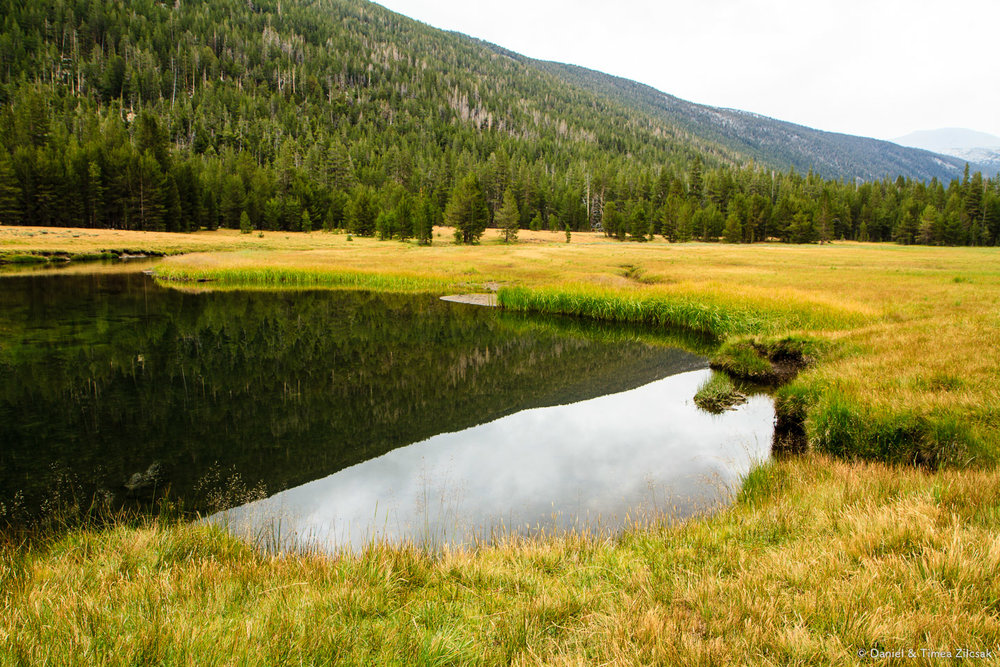 Beautiful meadows of Lyell Canyon and puddles of water from the Lyell Fork of the Tuolumne River