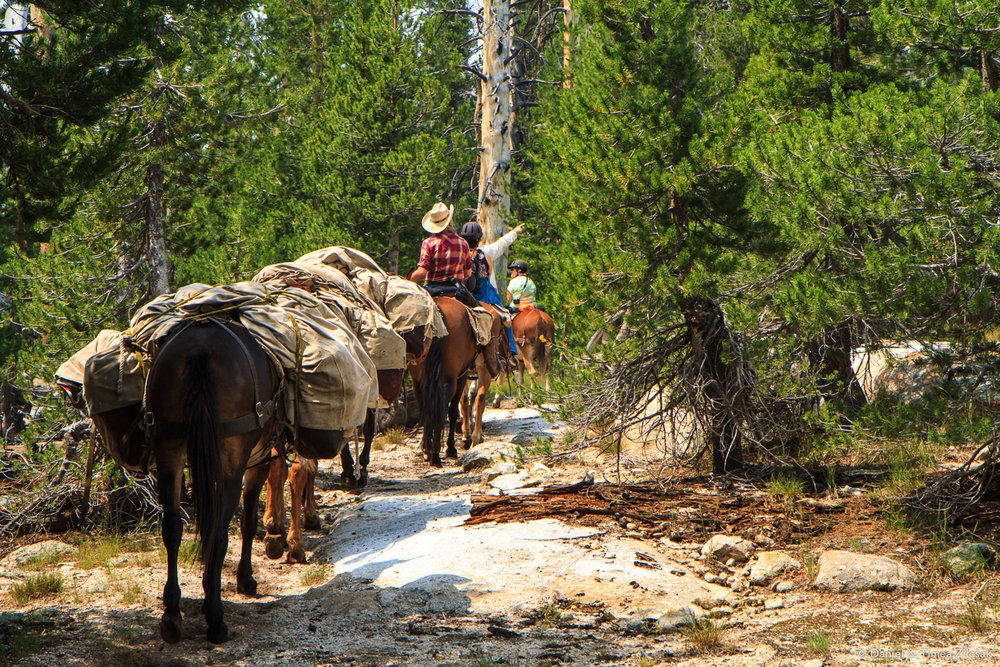 Riders from Sunrise Camp going down to Merced Lake for a day trip, Yosemite National Park, CA