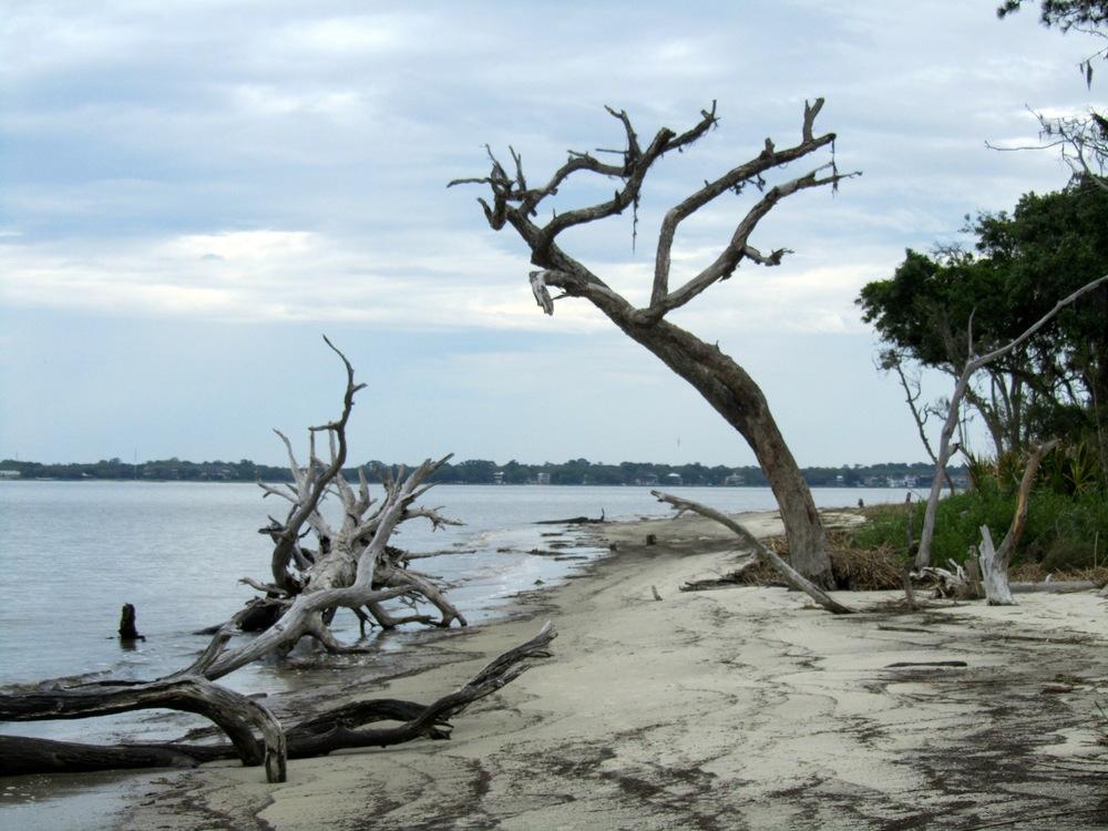 driftwood beach - free.jpg