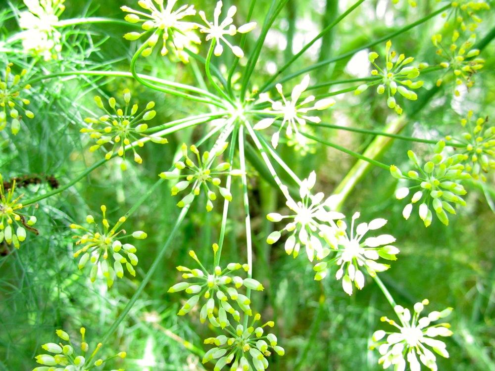 charleston flowers.jpg