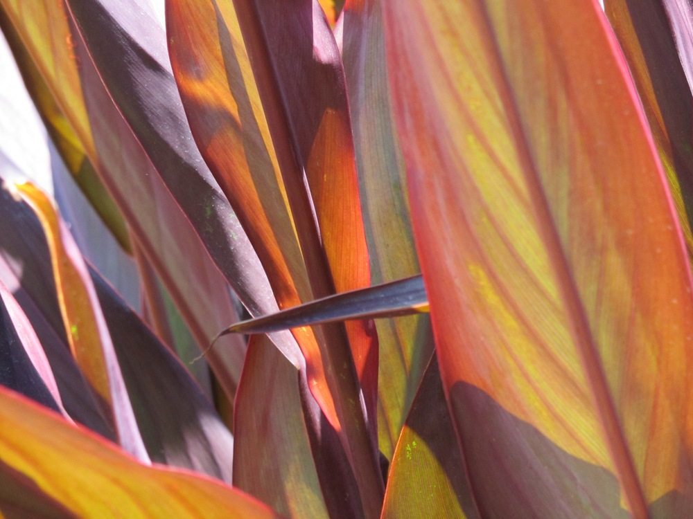 up close leaves.jpg