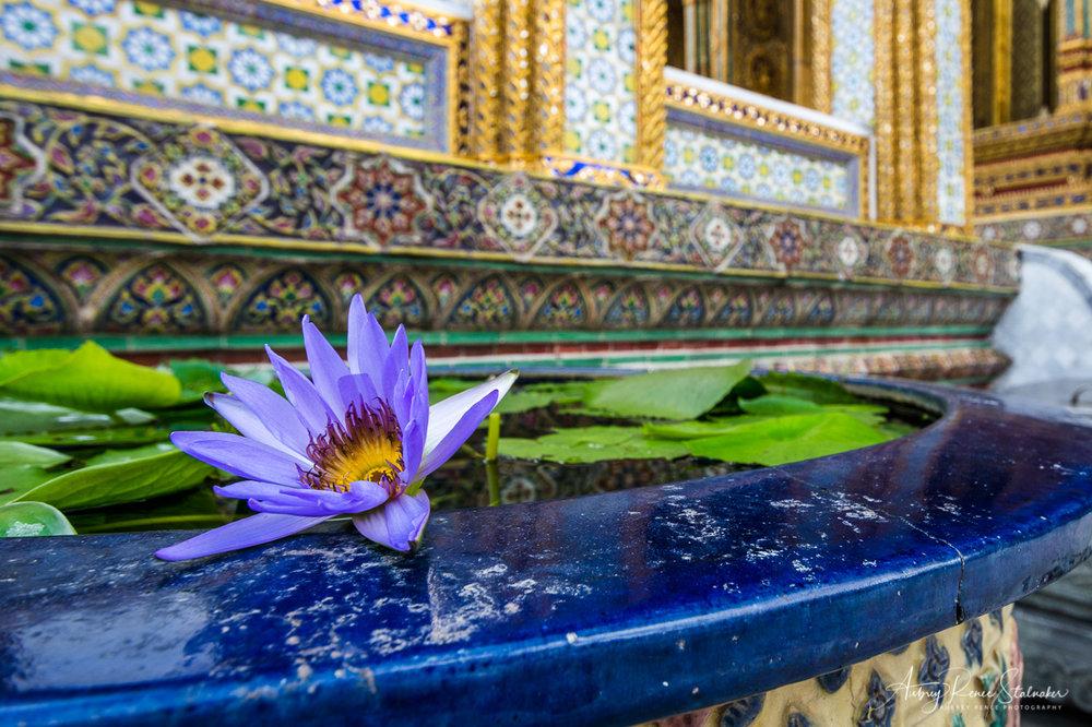 Lotus Flower in Pool at Wat Phra Kaew in Bangkok, Thailand