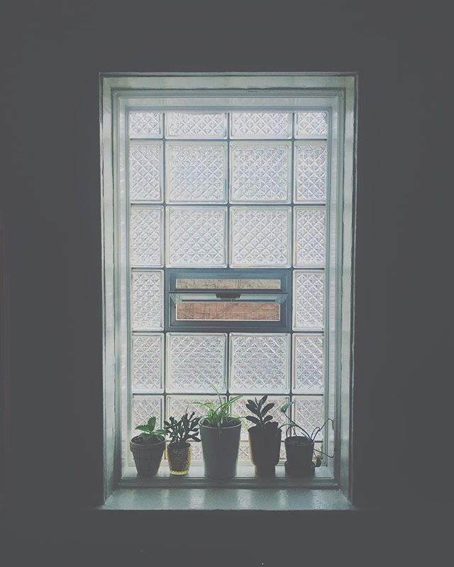 🌿 . . . . . . . . #houseplants #houseplantsofinstagram #iplanteven #thesill #succulents #monstera #kitchenplants #windowsillgarden