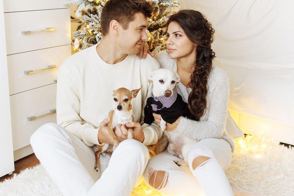affection-canine-christmas-326602.jpg