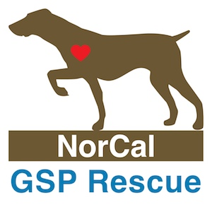 NCGSP Logo_Square 300px.jpg
