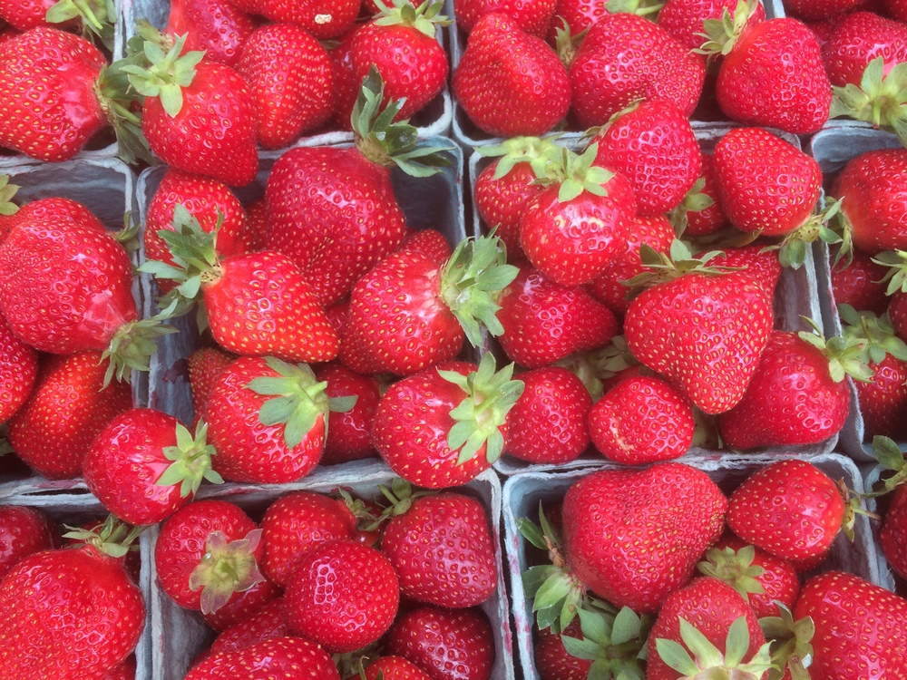 Pre-order of strawberries we picked for a CSA member. These berries just keep coming!