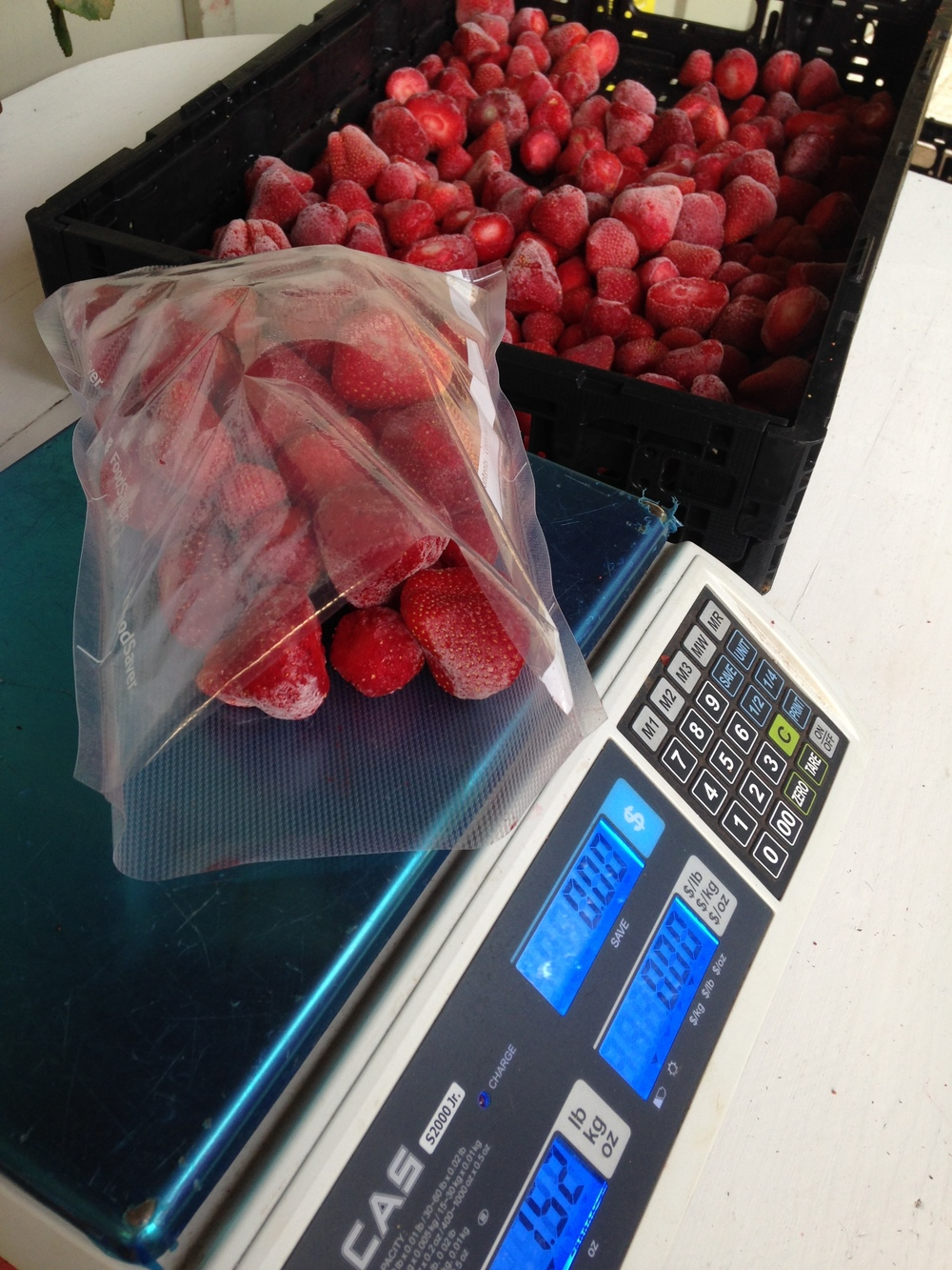 Bagging frozen strawberries for Fall CSA memberships