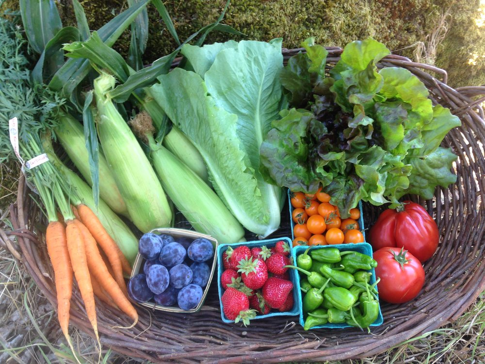 Carrots, corn, romaine, green leaf lettuce, tomatoes, sungolds, padron peppers, strawberries and plums.