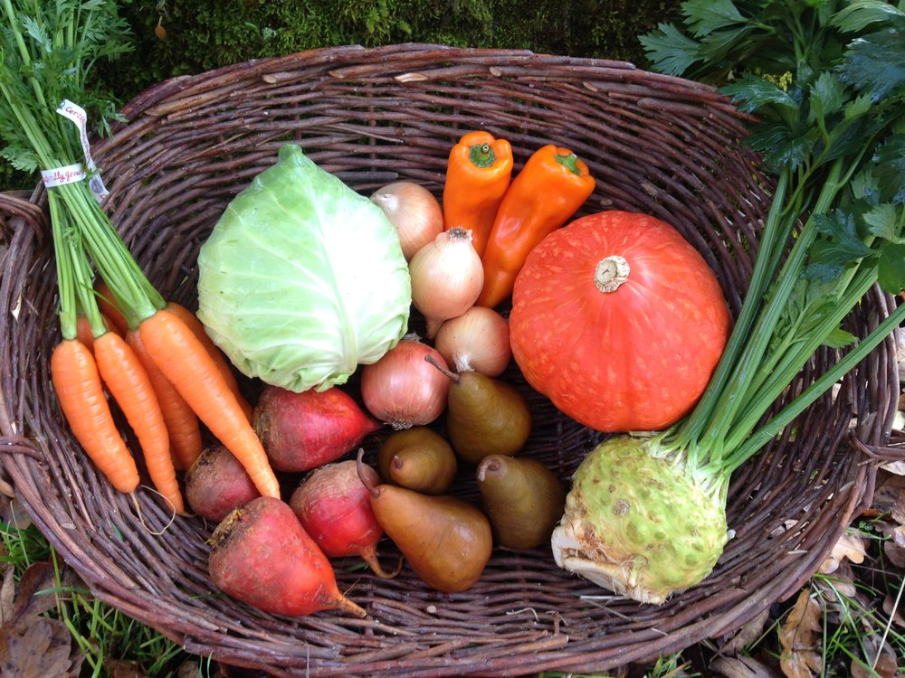Carrots, cabbage, onions, sweet peppers, red kuri squash, celeriac, bosc pears, bulk beets.