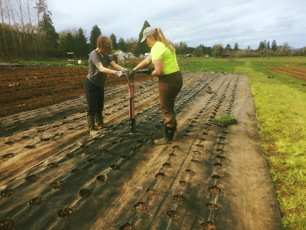 Farmers Alice and Marissa getting some extremely early season outdoor Kale and Chard transplants in during mid-March.