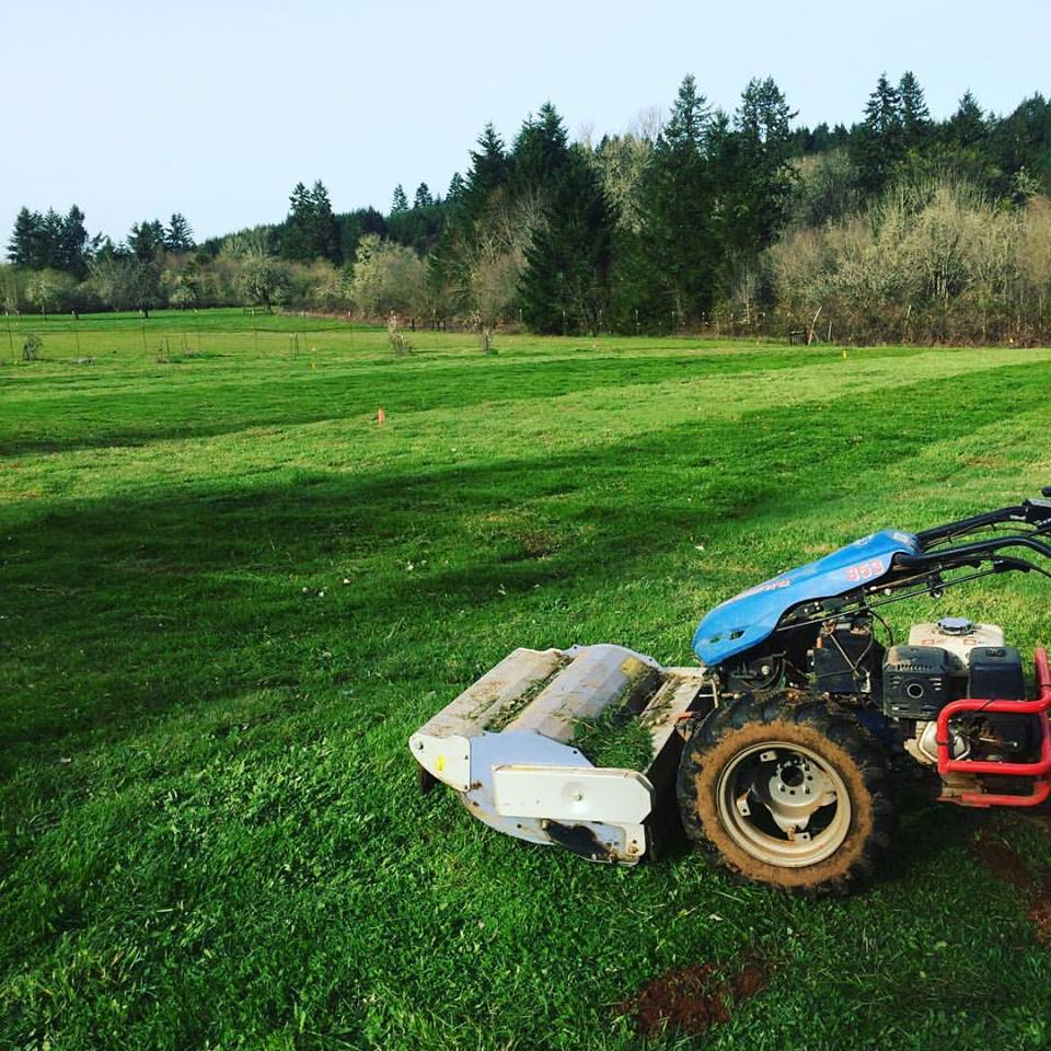 Freshly mowed 1/2 acre field on April 3rd. This area will be for fall and winter brassicas.