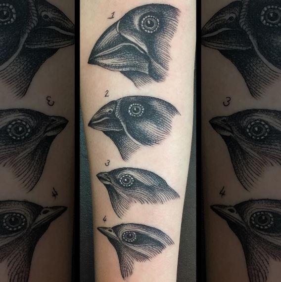 darwinfinches.JPG