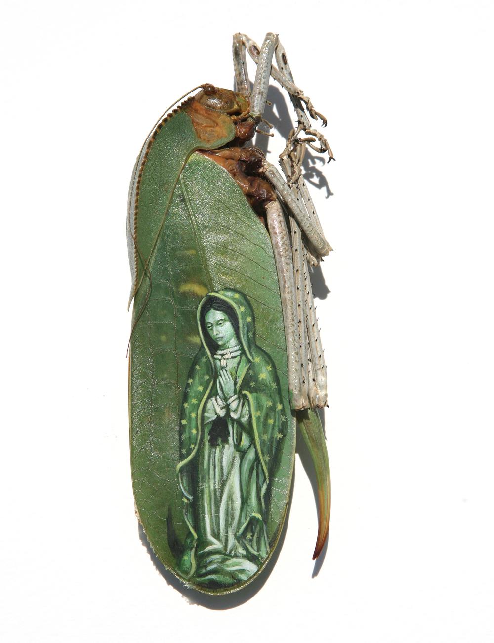 Evan Skrederstu.  Virgen de Guadalupe.  2009 – acrylic on beetle, 3″ x 1″.