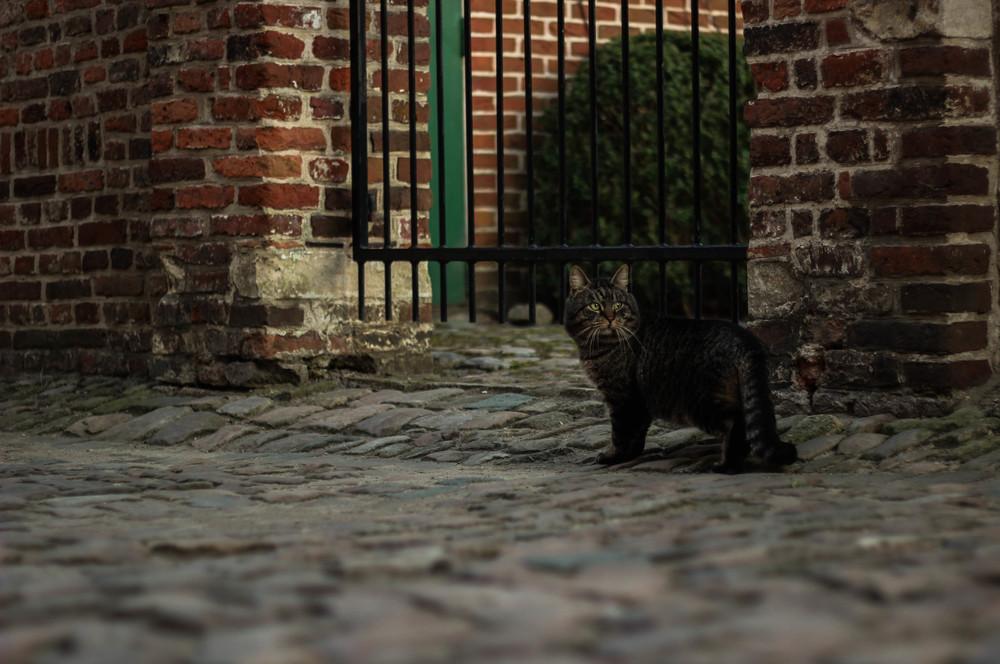 Cobblestone Cat.