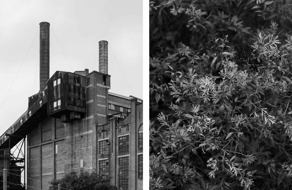 BresicWhitney Culture Blog | Photo: Ben Hosking