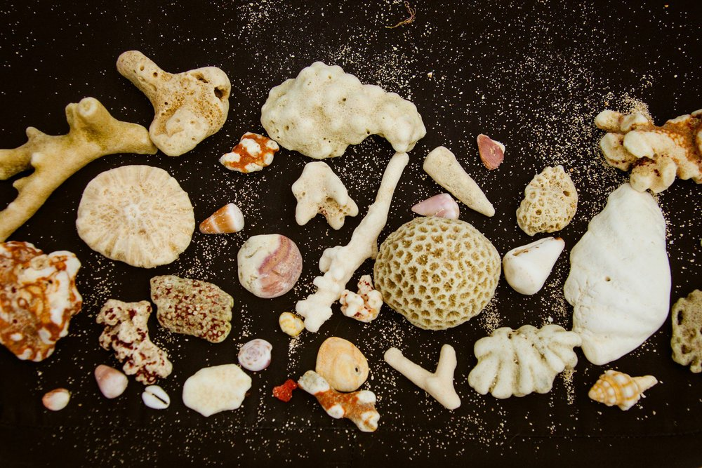 shells I collected