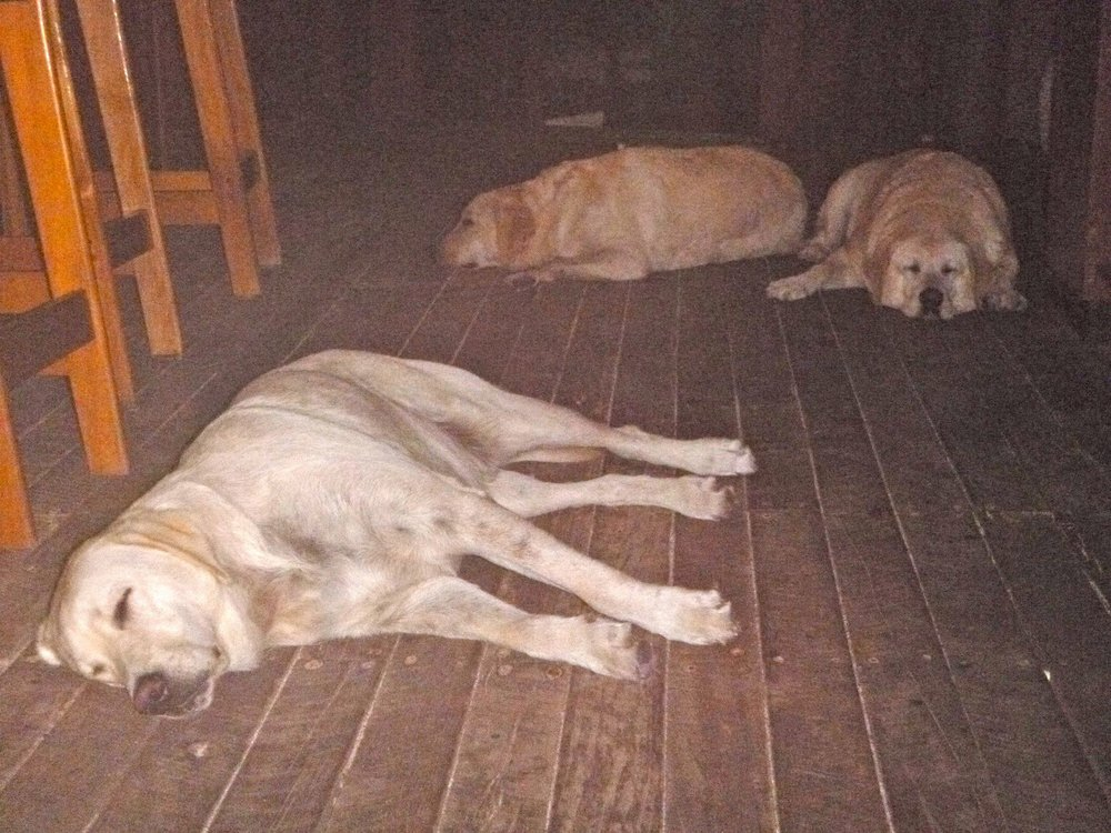 the 3 lazy dogs