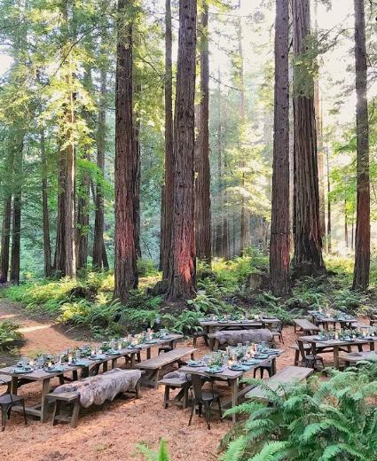 forest-dinner