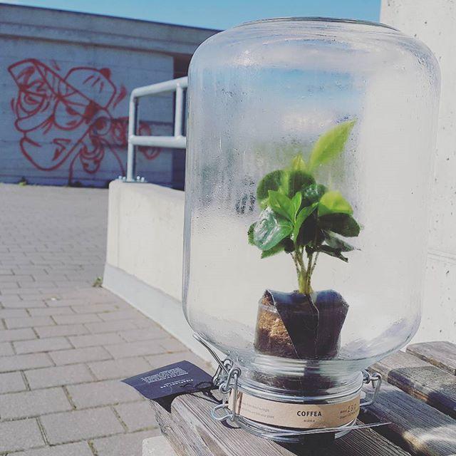 Kavovec v steklenem kozarcu je ljubitelj umetnosti -