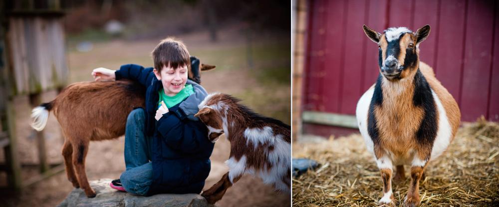 Goats-7.jpg