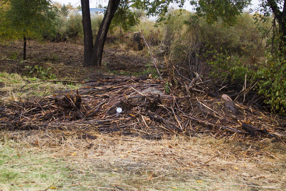 Remnants of brush and small trees are left in a pile after workers sawed them down, near where homeless people used to shelter.