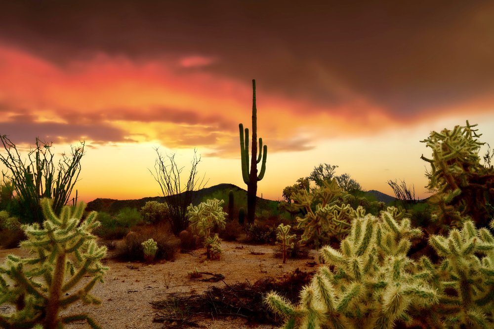 """""""Photo taken during monsoon season where the desert gets graced with stormy skies and incredible sunsets."""""""