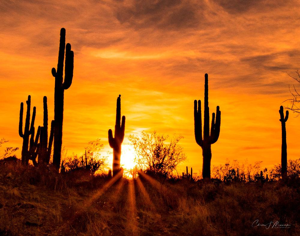 CJM-Photo_Print_11x14_Desert-Sunrays.jpg