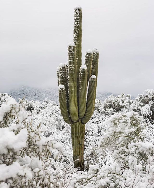 """Happy New Year! It's a pretty special occurrence when we get snow at saguaro-level. What a beautiful way to start the new year in #arizona! #comevisit . We headed up to #greeraz for New Years and ended up having to stay an extra day after waking up to 16"""" of fresh snow and unplowed roads. Our girls loved playing in it and we sure enjoyed the magical views! See our stories for some highlights from the family behind #thenesttinyhouse. We wish you all a new year of a little less stuff and space and a little more love and grace. 📷 by @jessej.media"""