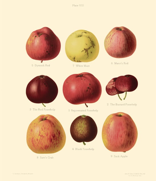 ancient cider apples.jpg