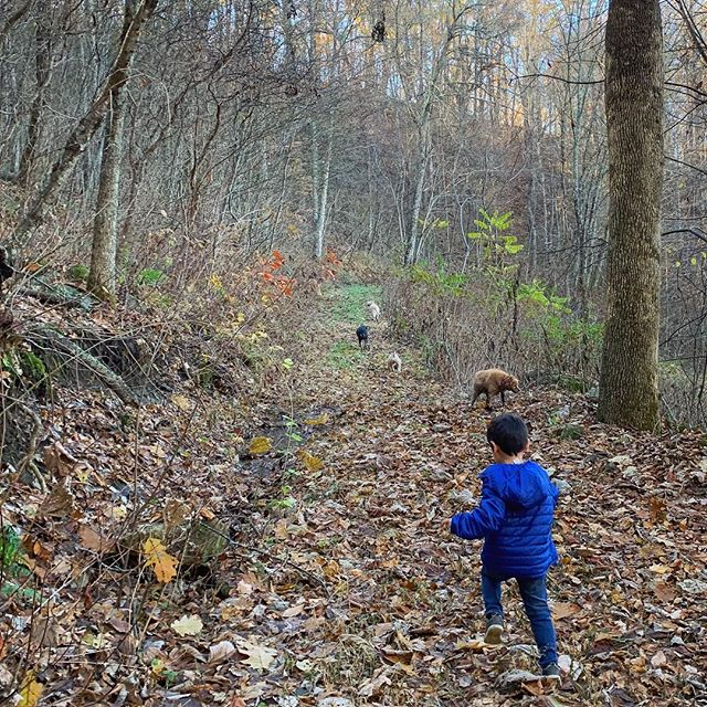Very Thankful For: • several wonderful days back home with the family • hiking some of my favorite trails in my favorite woods • my first Thanksgiving in the US in three years • still eating gumbo instead of turkey on Thanksgiving • two little helpers helping me make the pumpkin pie • winning some super sweet Turkey Trot-themed socks (plus $75) at the Asheville 5K 🦃 • placing 3rd at said super hilly 5k (20:30) despite being out of shape/coming back from my broken ankle • winning over the heart of my fussy 18 month niece • pretending to chase the (very real) bears and coyotes through the woods with these goofballs 💛
