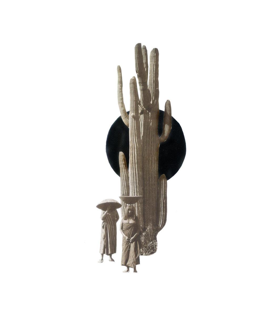 stick-and-lianas.jpg
