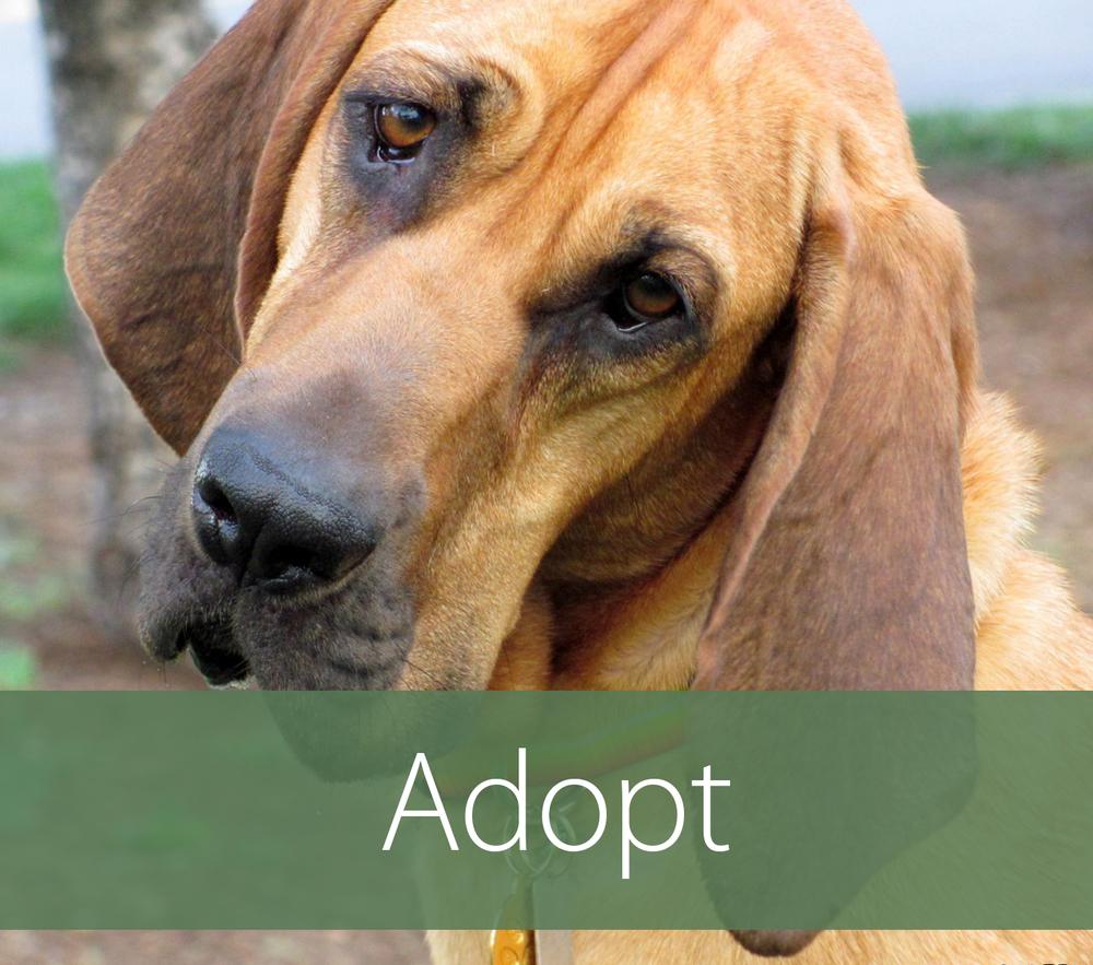 Adopt Box.jpg