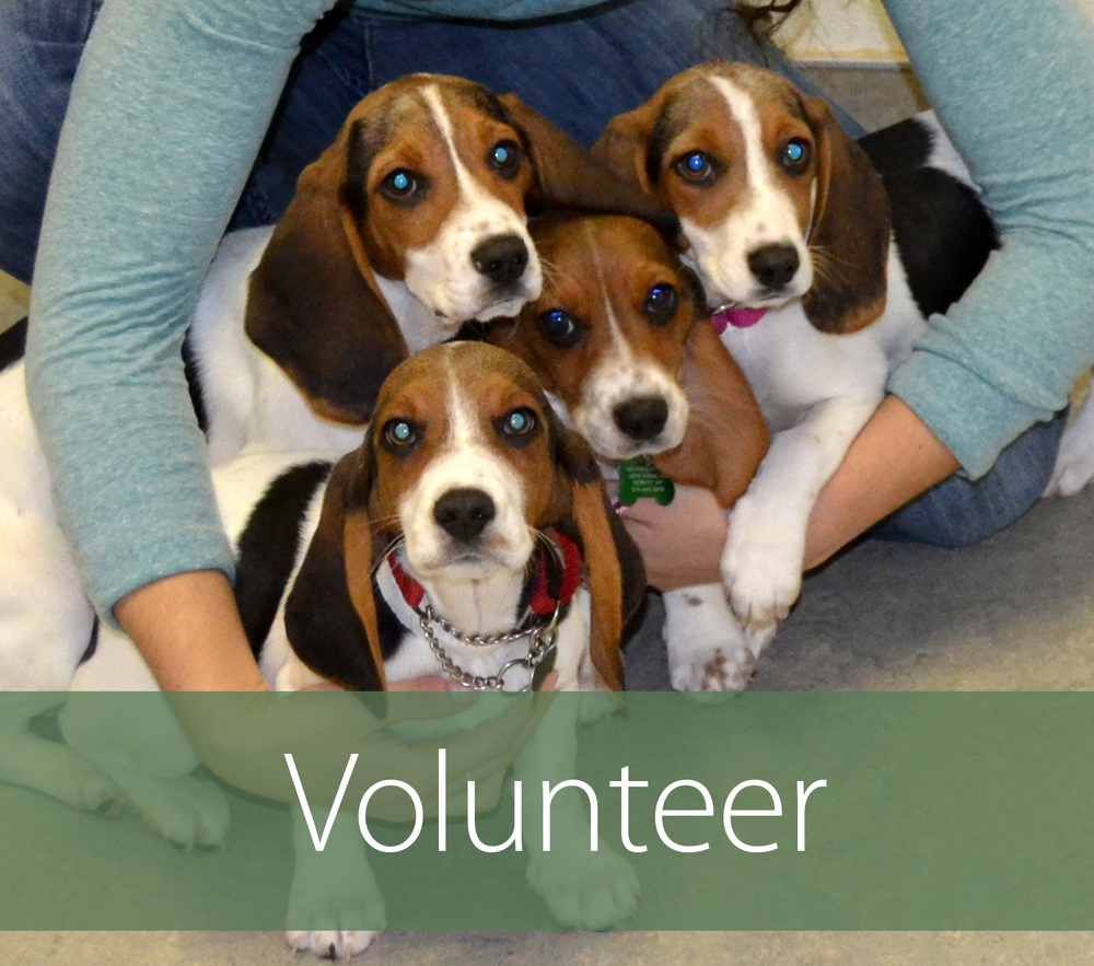 Volunteer Box.jpg