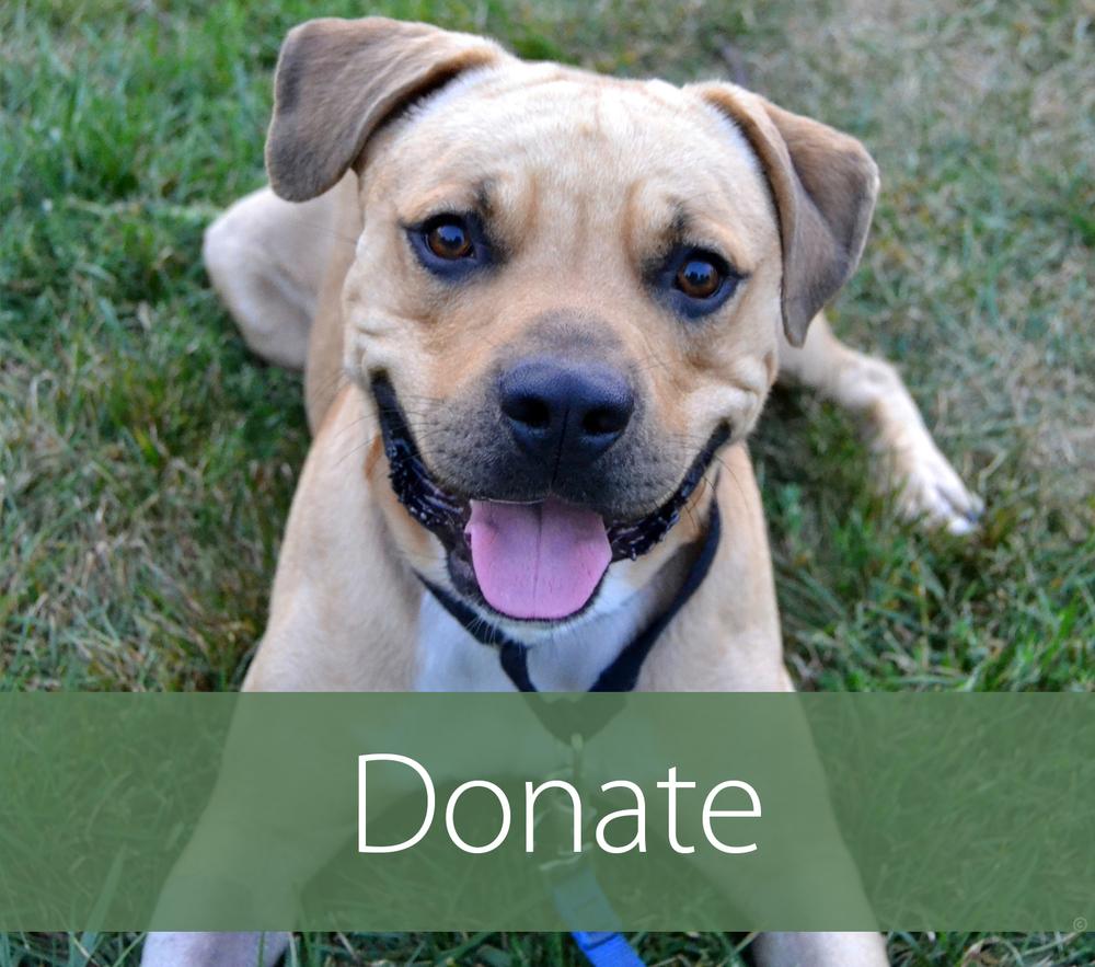 Donate Box.jpg